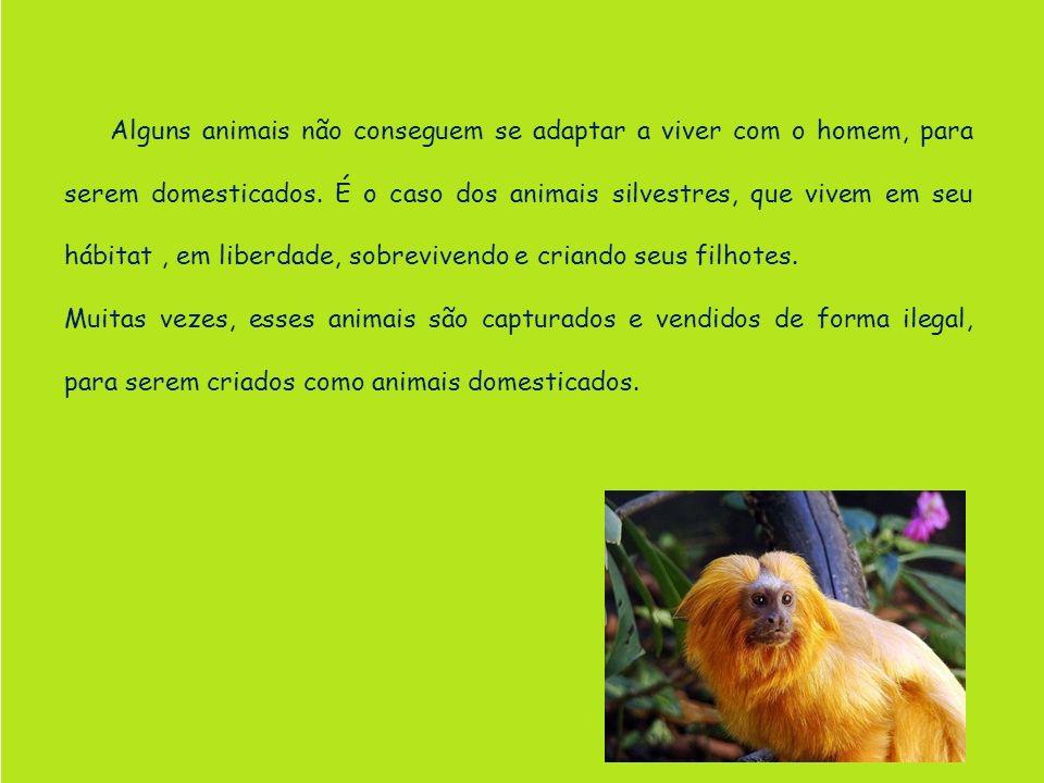 Alguns animais não conseguem se adaptar a viver com o homem, para serem domesticados. É o caso dos animais silvestres, que vivem em seu hábitat , em liberdade, sobrevivendo e criando seus filhotes.