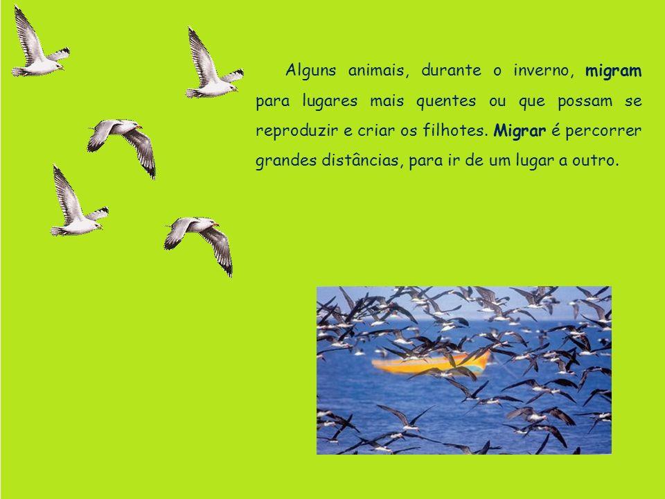 Alguns animais, durante o inverno, migram para lugares mais quentes ou que possam se reproduzir e criar os filhotes.