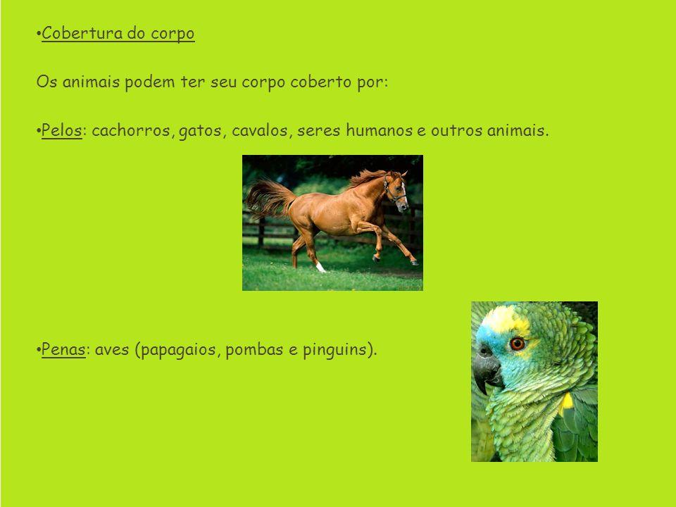 Cobertura do corpo Os animais podem ter seu corpo coberto por: Pelos: cachorros, gatos, cavalos, seres humanos e outros animais.