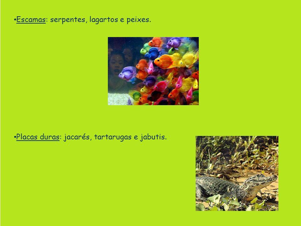 Escamas: serpentes, lagartos e peixes.