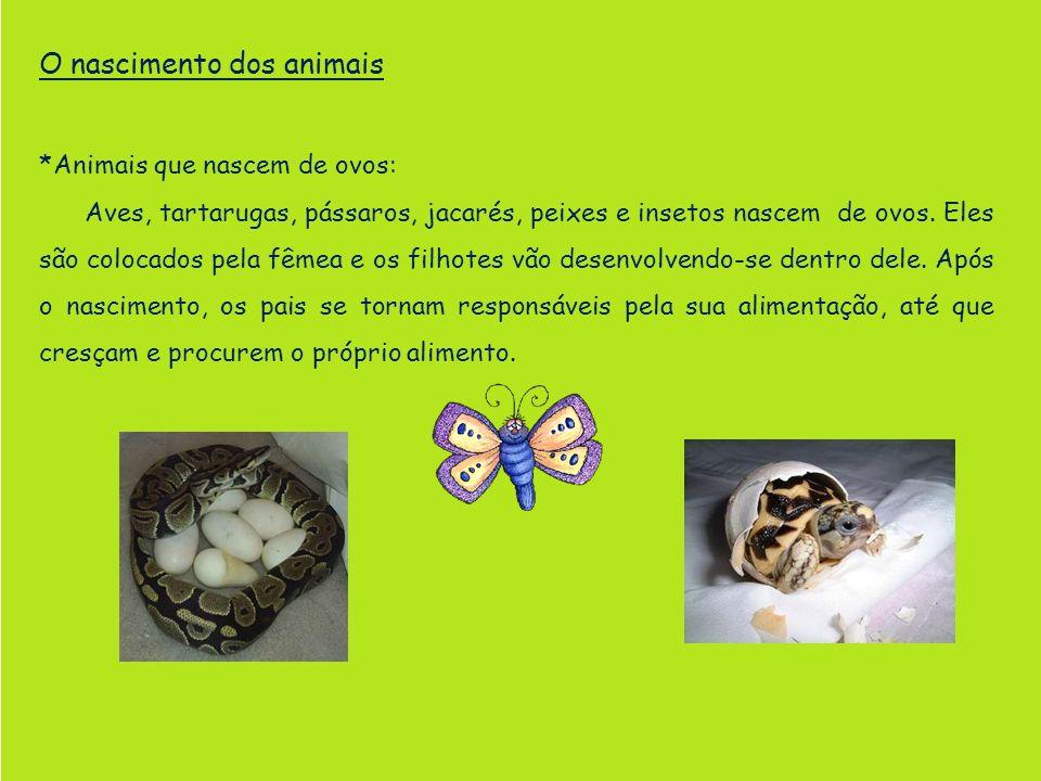 O nascimento dos animais