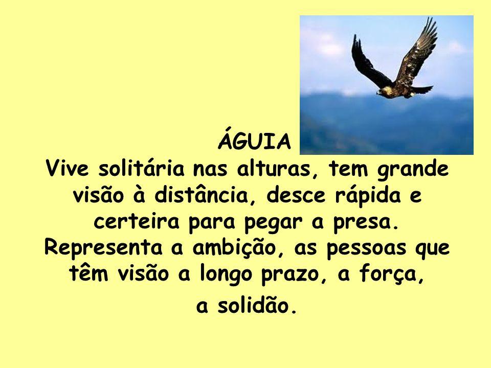 ÁGUIA Vive solitária nas alturas, tem grande visão à distância, desce rápida e certeira para pegar a presa.
