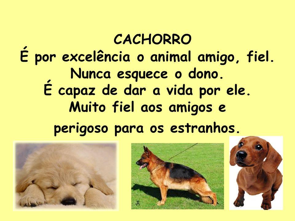 CACHORRO É por excelência o animal amigo, fiel. Nunca esquece o dono
