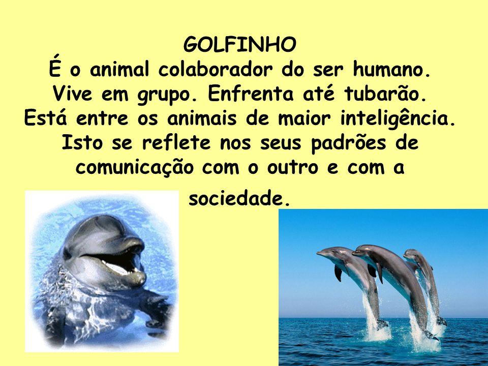 GOLFINHO É o animal colaborador do ser humano. Vive em grupo