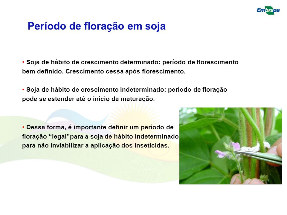 Período de floração em soja