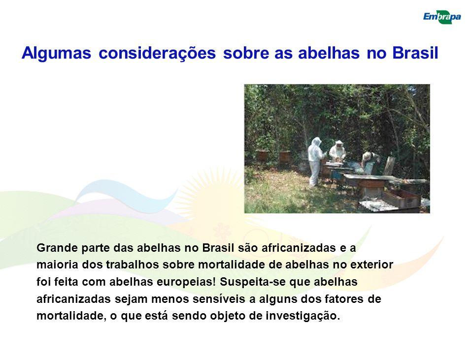 Algumas considerações sobre as abelhas no Brasil