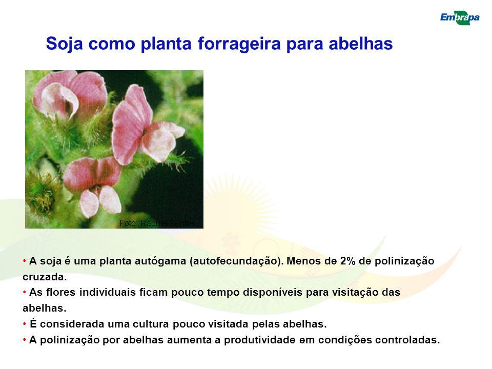 Soja como planta forrageira para abelhas