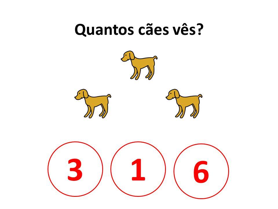 Quantos cães vês 3 1 6