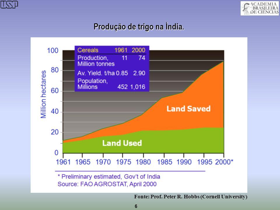 Produção de trigo na Índia.