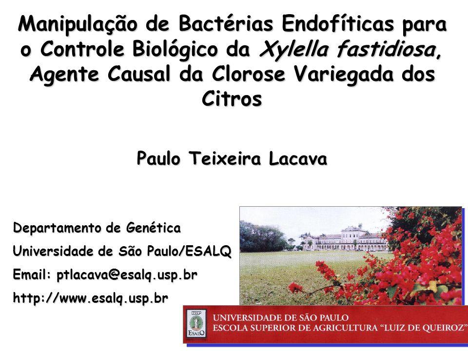 Manipulação de Bactérias Endofíticas para o Controle Biológico da Xylella fastidiosa, Agente Causal da Clorose Variegada dos Citros