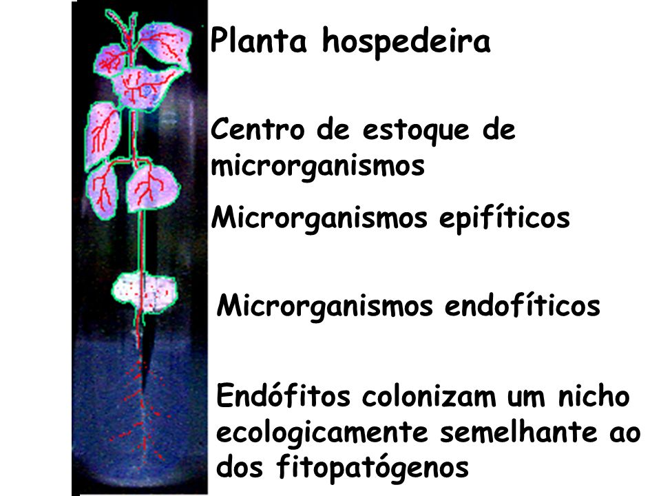 Planta hospedeira Centro de estoque de microrganismos