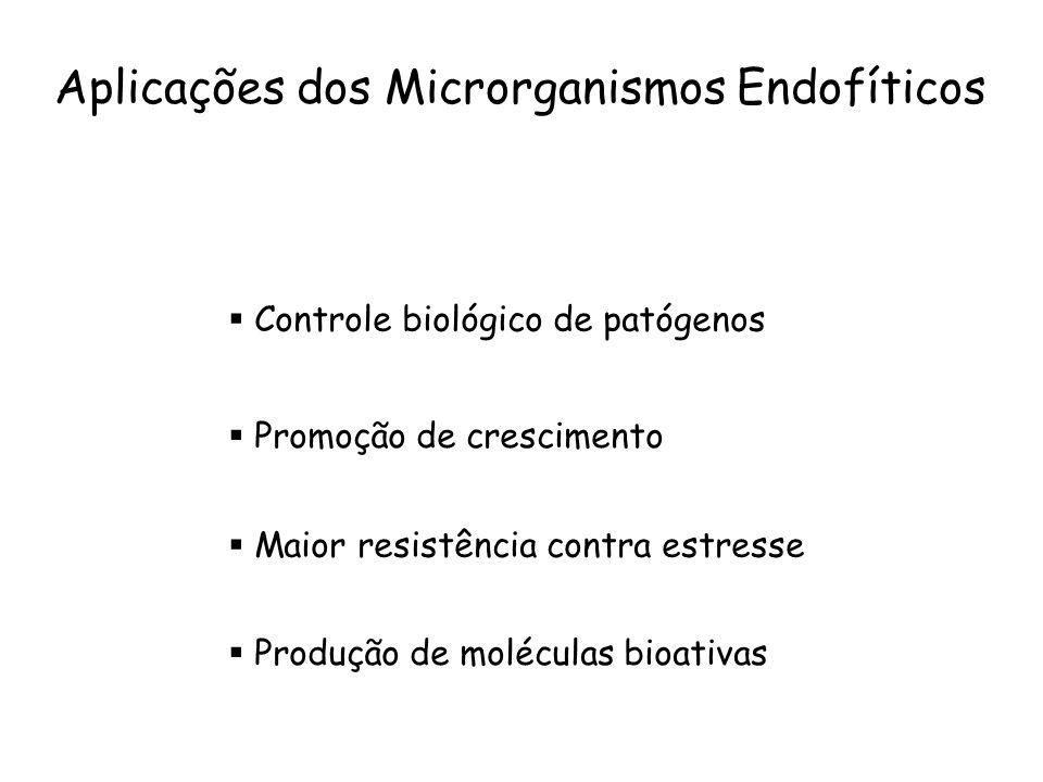 Aplicações dos Microrganismos Endofíticos