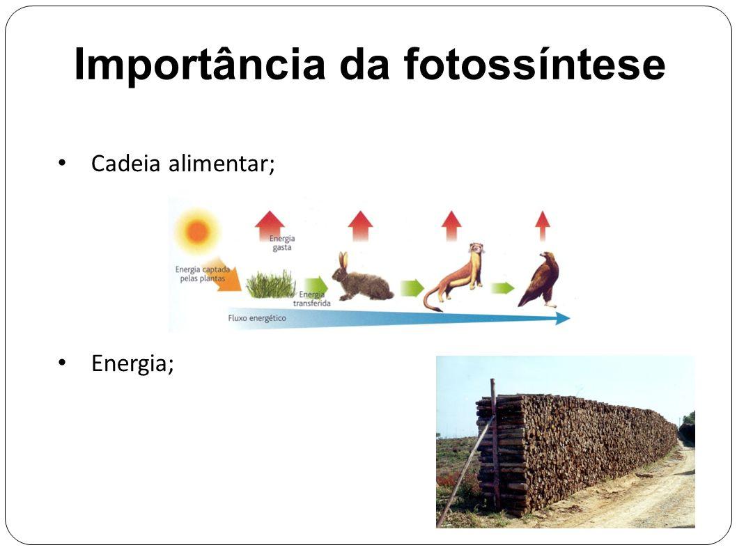 Importância da fotossíntese