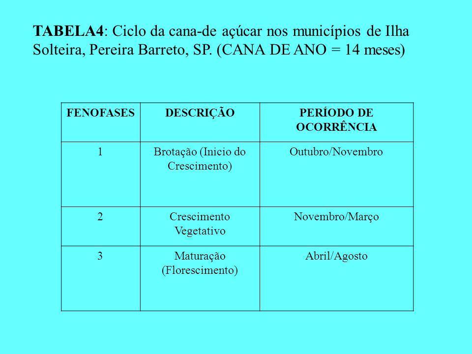 TABELA4: Ciclo da cana-de açúcar nos municípios de Ilha Solteira, Pereira Barreto, SP. (CANA DE ANO = 14 meses)