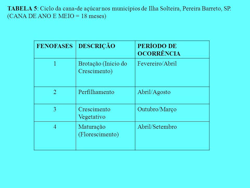 TABELA 5: Ciclo da cana-de açúcar nos municípios de Ilha Solteira, Pereira Barreto, SP. (CANA DE ANO E MEIO = 18 meses)