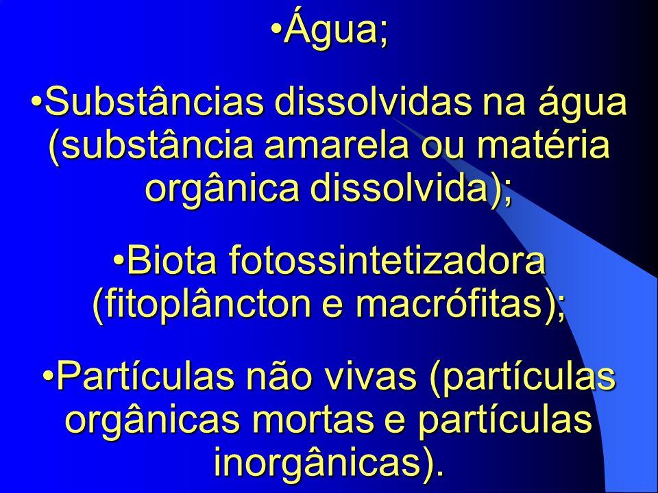 Biota fotossintetizadora (fitoplâncton e macrófitas);