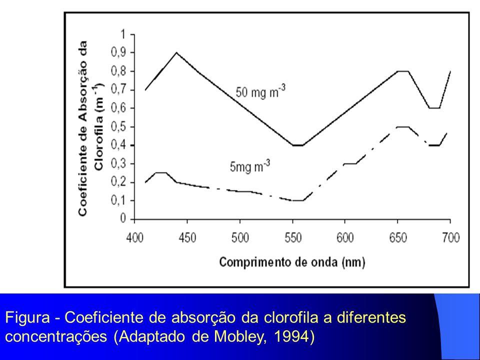 Coeficiente de Absorção da Clorofila (m -1)