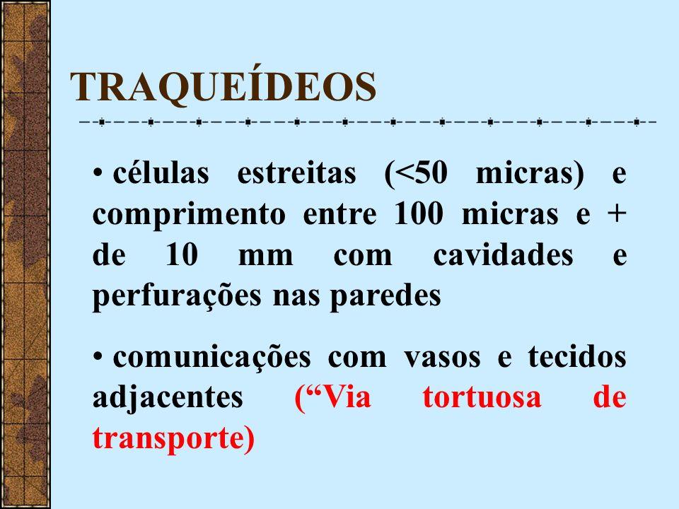 TRAQUEÍDEOS células estreitas (<50 micras) e comprimento entre 100 micras e + de 10 mm com cavidades e perfurações nas paredes.