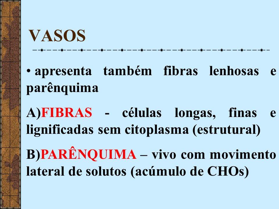 VASOS apresenta também fibras lenhosas e parênquima