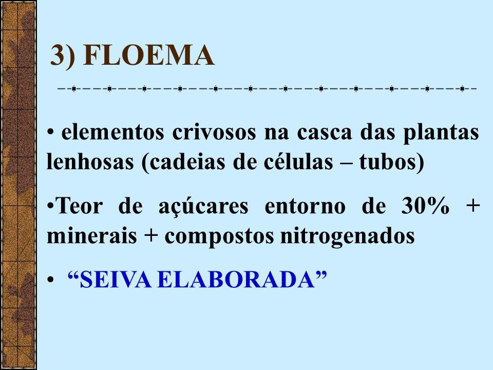 3) FLOEMA elementos crivosos na casca das plantas lenhosas (cadeias de células – tubos)