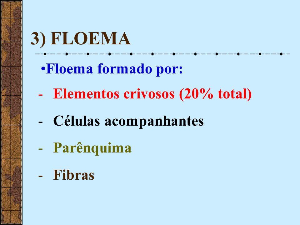 3) FLOEMA Floema formado por: Elementos crivosos (20% total)