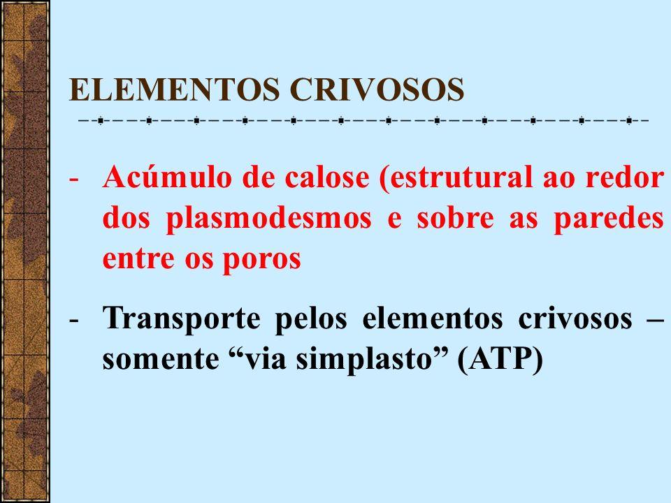 ELEMENTOS CRIVOSOS Acúmulo de calose (estrutural ao redor dos plasmodesmos e sobre as paredes entre os poros.