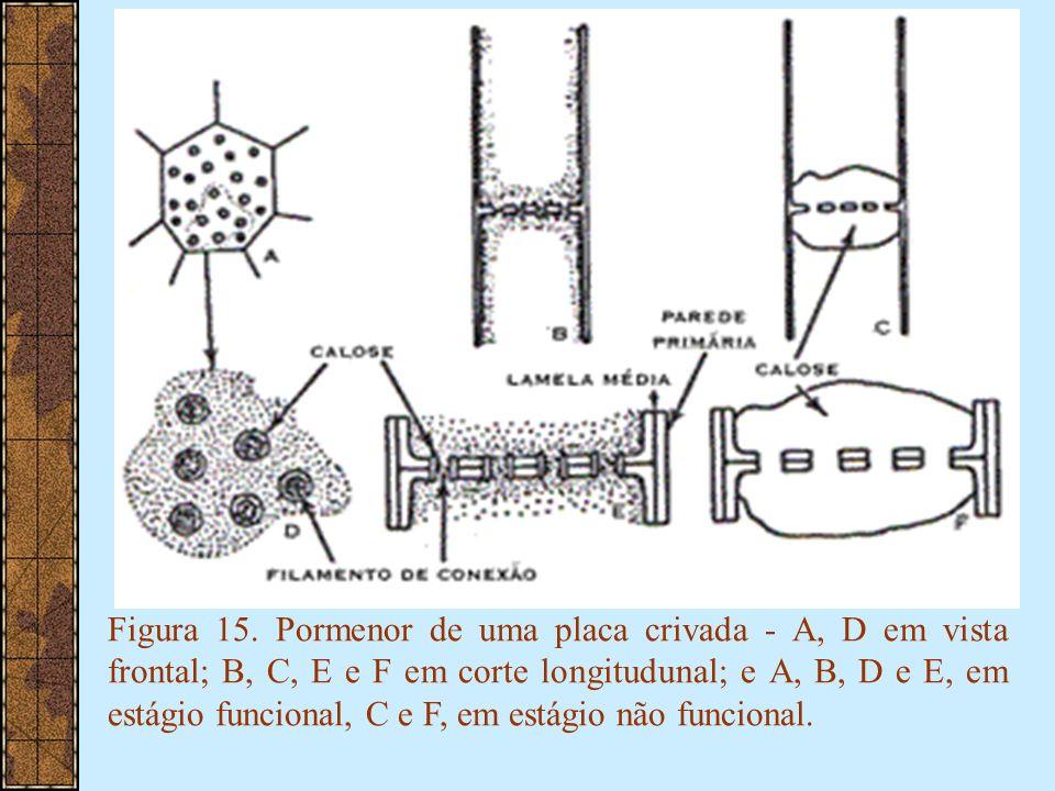 Figura 15.