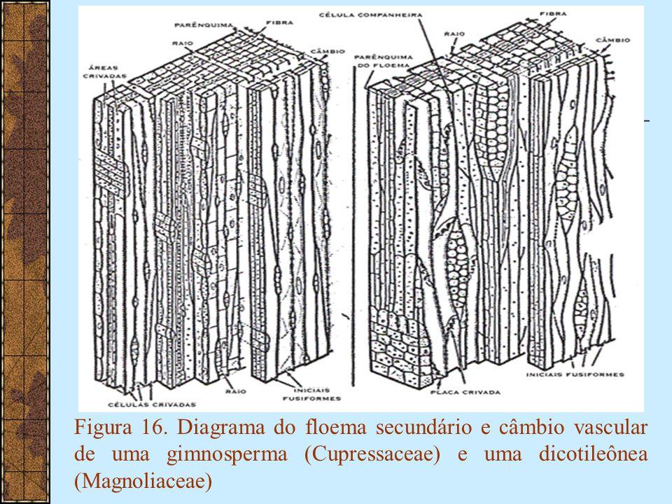 Figura 16.
