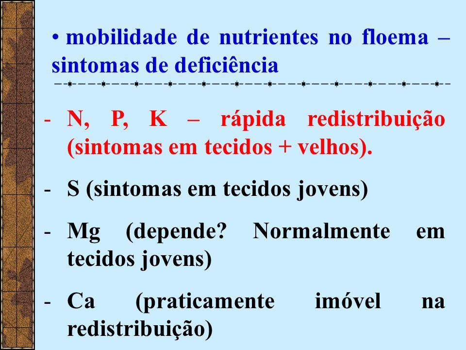 mobilidade de nutrientes no floema – sintomas de deficiência