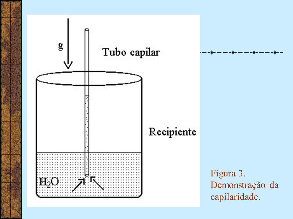 Figura 3. Demonstração da capilaridade.