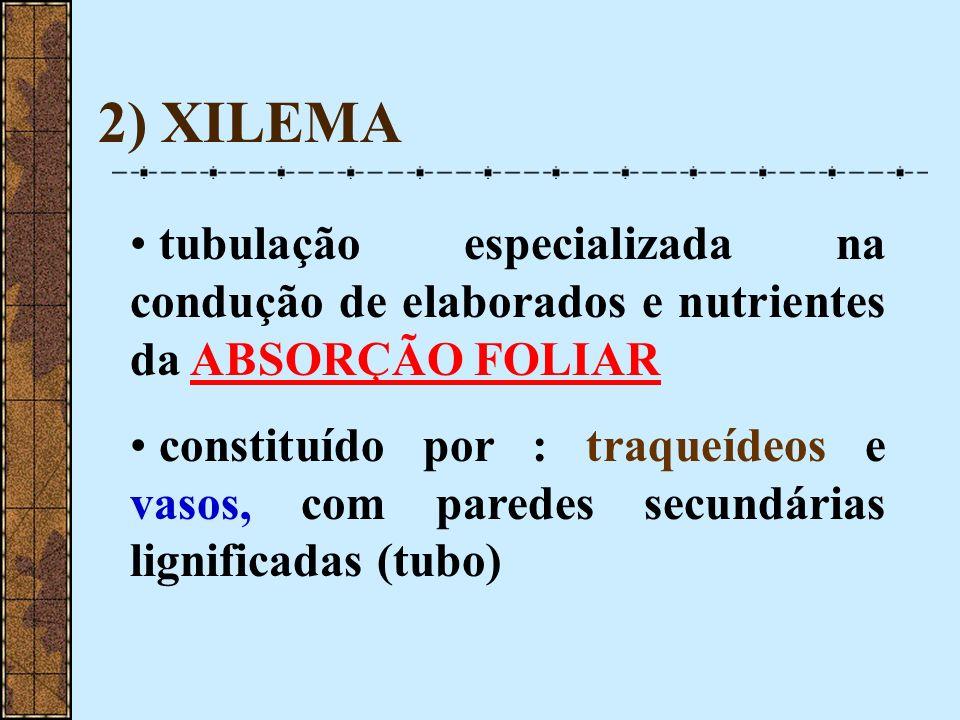 2) XILEMA tubulação especializada na condução de elaborados e nutrientes da ABSORÇÃO FOLIAR.