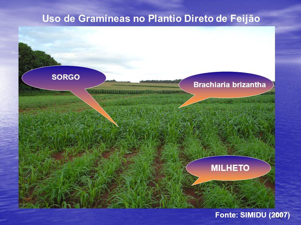 Uso de Gramíneas no Plantio Direto de Feijão