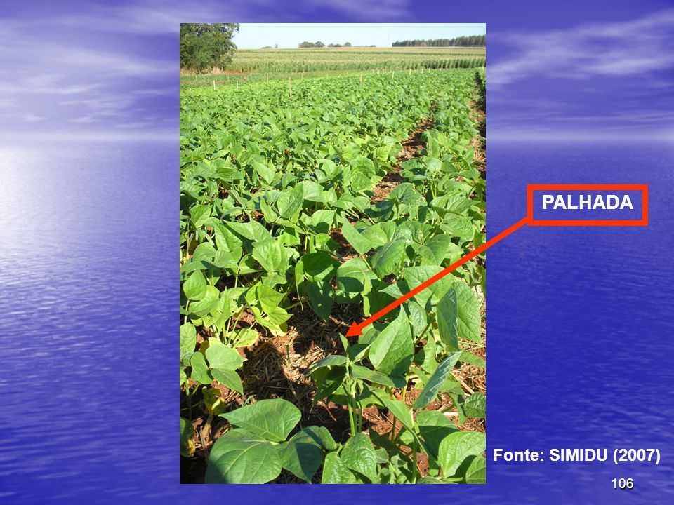 PALHADA Fonte: SIMIDU (2007)