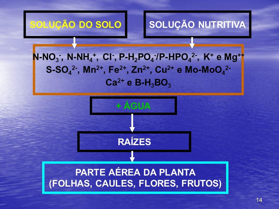 N-NO3-, N-NH4+, Cl-, P-H2PO4-/P-HPO42-, K+ e Mg++