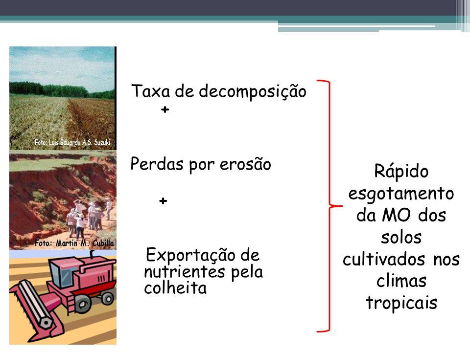 Rápido esgotamento da MO dos solos cultivados nos climas tropicais