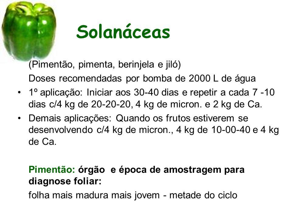 Solanáceas (Pimentão, pimenta, berinjela e jiló)