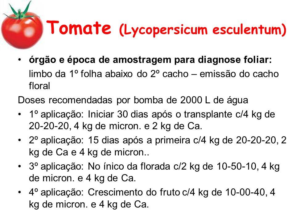 Tomate (Lycopersicum esculentum)