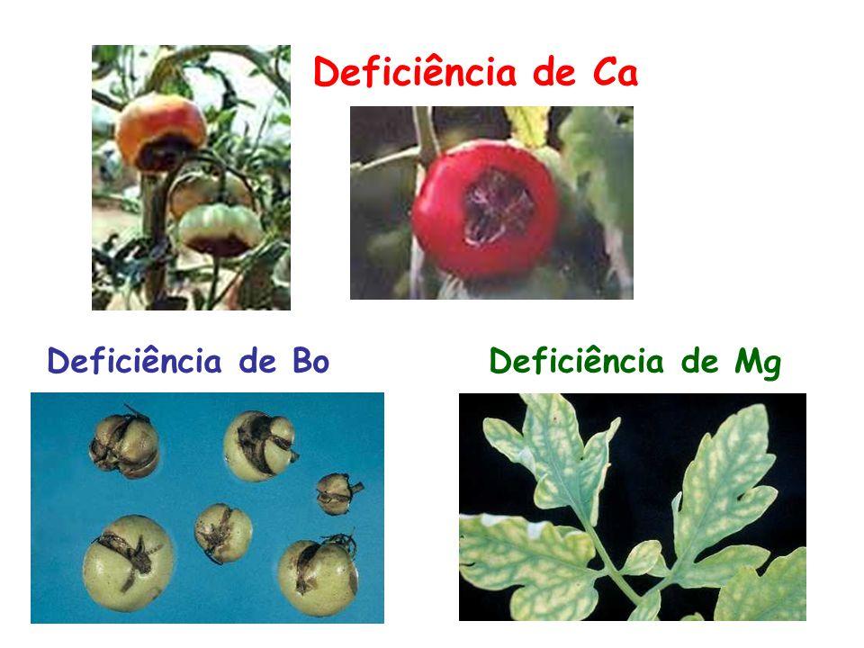 Deficiência de Ca Deficiência de Bo Deficiência de Mg