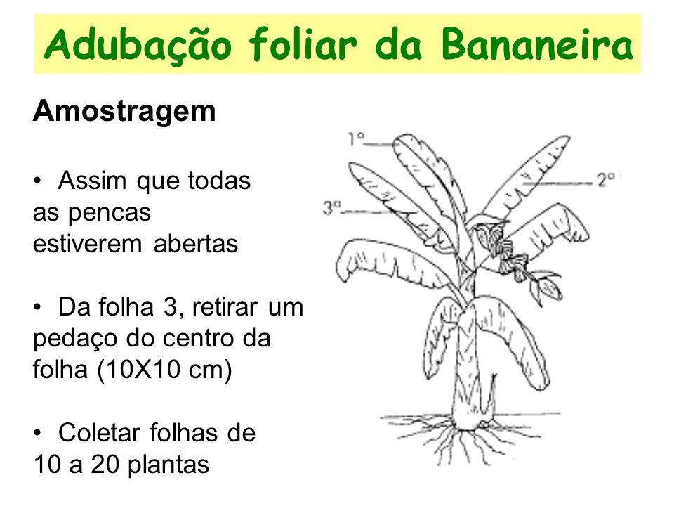Adubação foliar da Bananeira