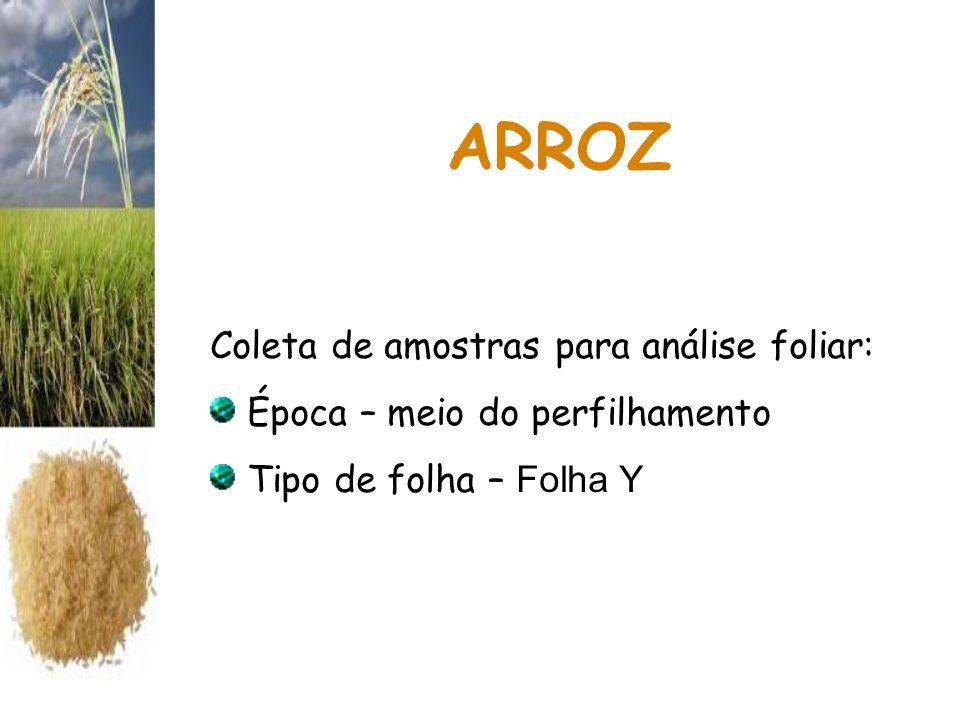 ARROZ Coleta de amostras para análise foliar: