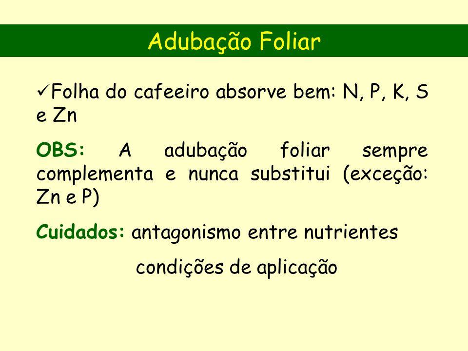 Adubação Foliar Folha do cafeeiro absorve bem: N, P, K, S e Zn. OBS: A adubação foliar sempre complementa e nunca substitui (exceção: Zn e P)