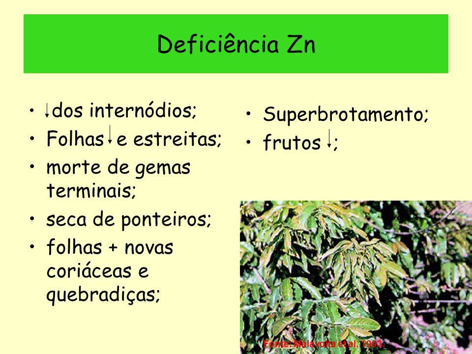 Deficiência Zn Superbrotamento; Folhas e estreitas; frutos ;