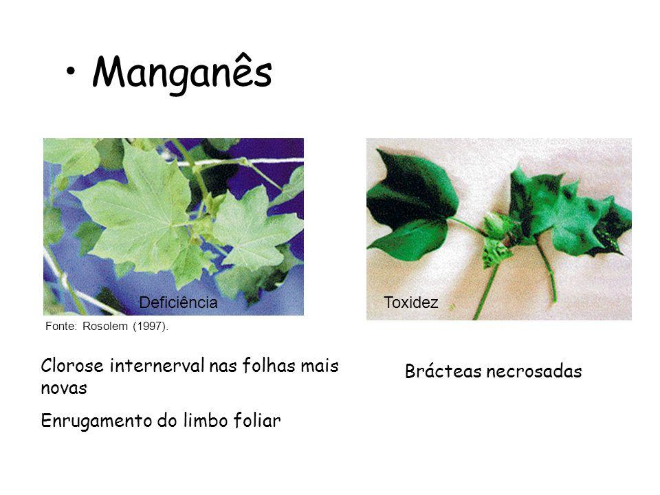 Manganês Clorose internerval nas folhas mais novas Brácteas necrosadas
