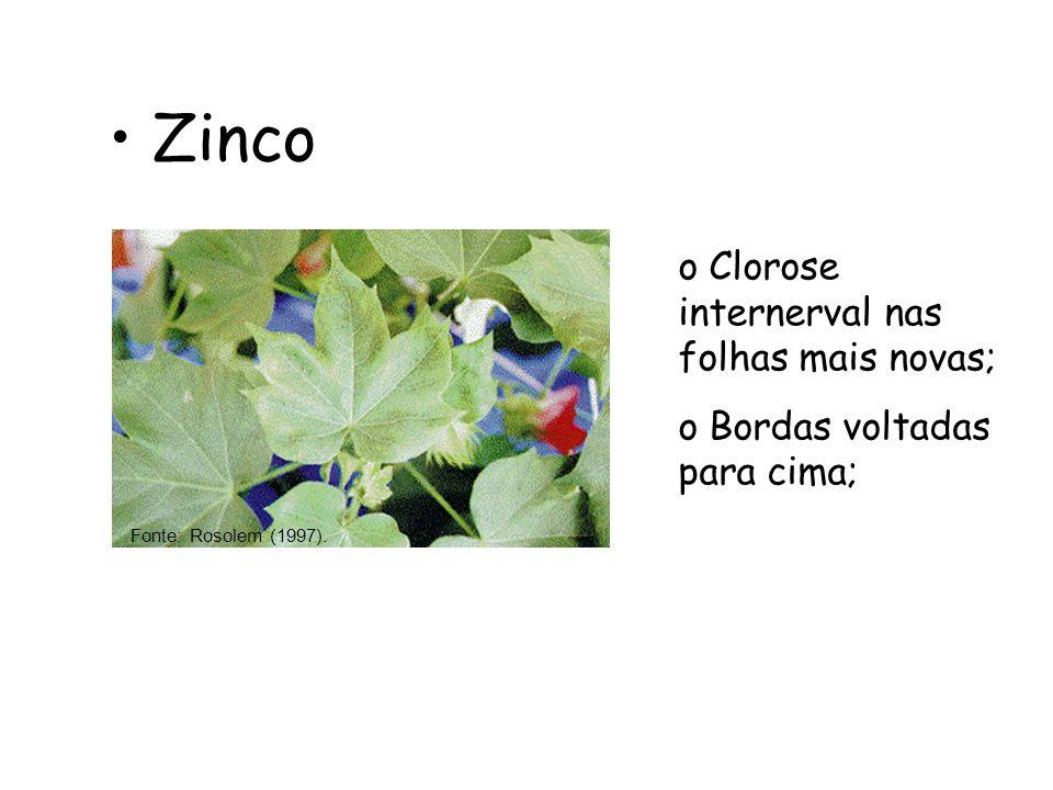Zinco Clorose internerval nas folhas mais novas;