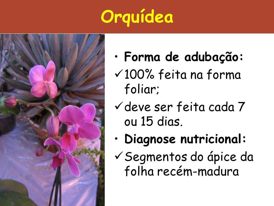 Orquídea Forma de adubação: 100% feita na forma foliar;