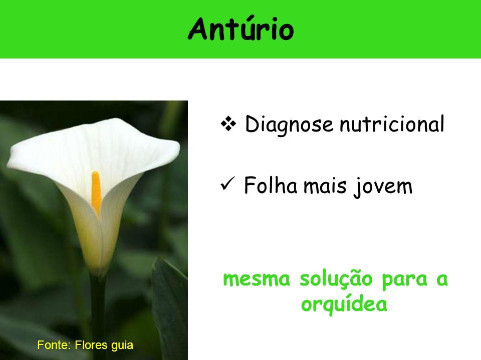mesma solução para a orquídea