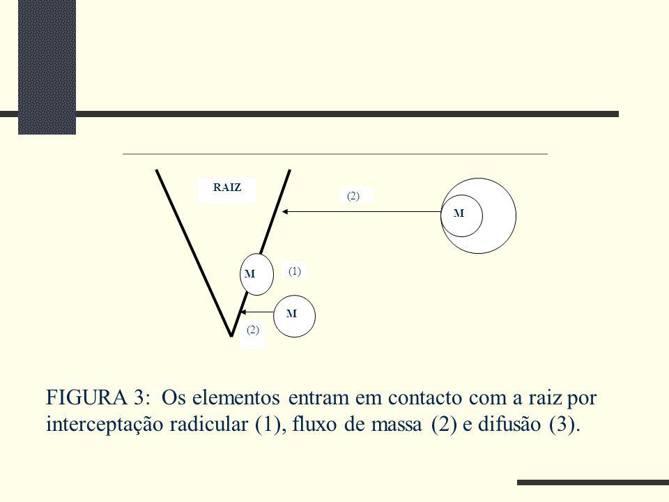 RAIZ H2O. (2) M. M. (1) M. (2)