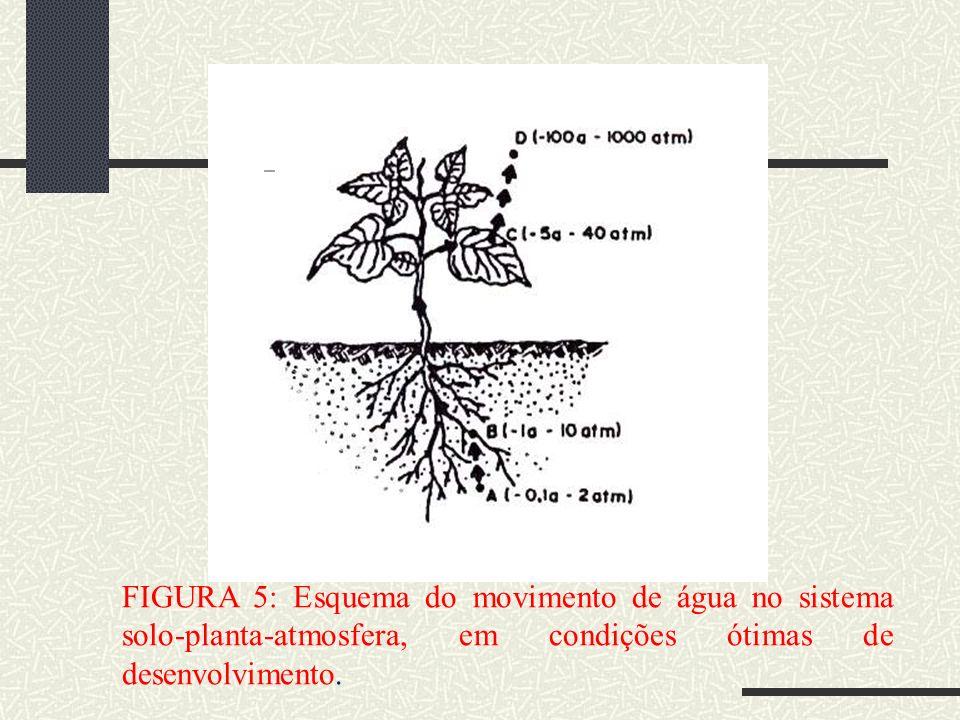 FIGURA 5: Esquema do movimento de água no sistema solo-planta-atmosfera, em condições ótimas de desenvolvimento.