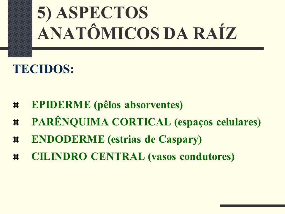 5) ASPECTOS ANATÔMICOS DA RAÍZ