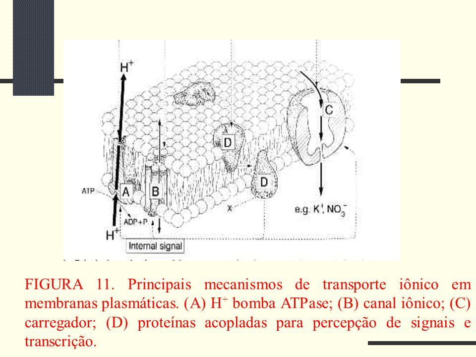 FIGURA 11. Principais mecanismos de transporte iônico em membranas plasmáticas.